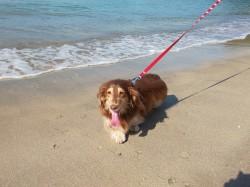 加太海水浴場を愛犬りんさんと散歩